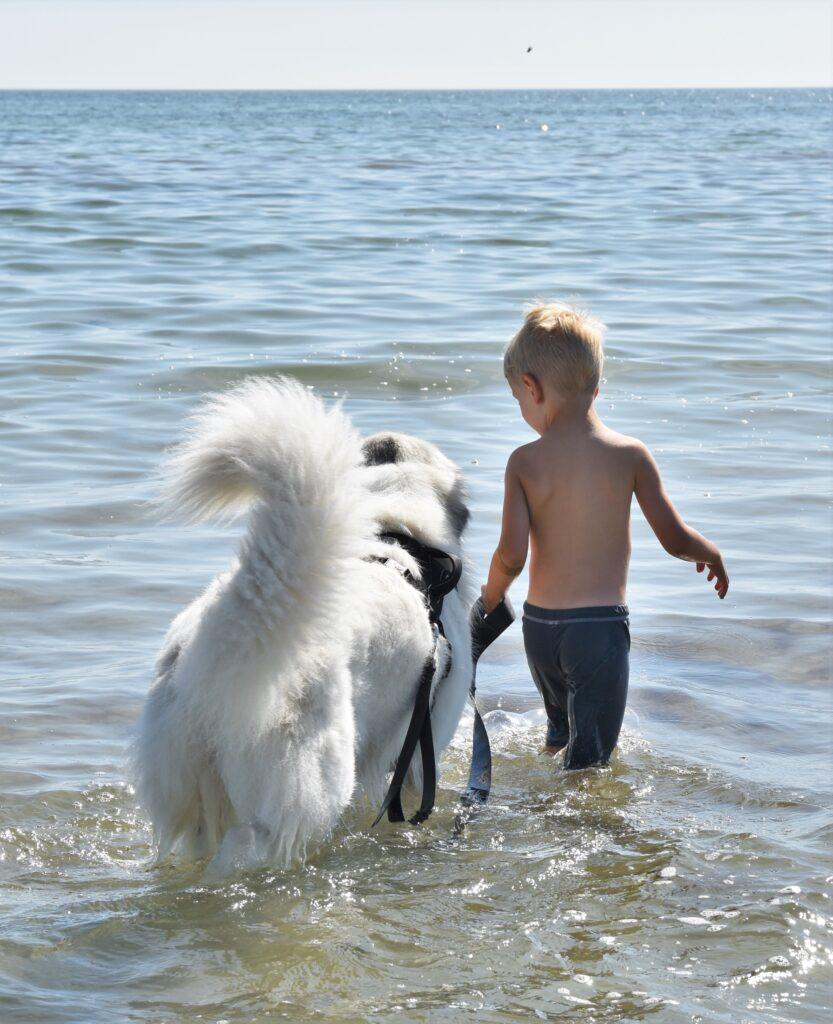 Sommar och hund